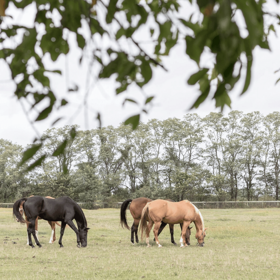 Community with riding stables amenities